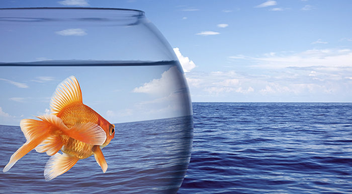 Goldfish looking out of goldfish bowl to sea demonstrating growth mindset